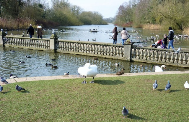 Coombe Abbey hotel and Coombe Country Park near Coventry feed the ducks, geese and swans